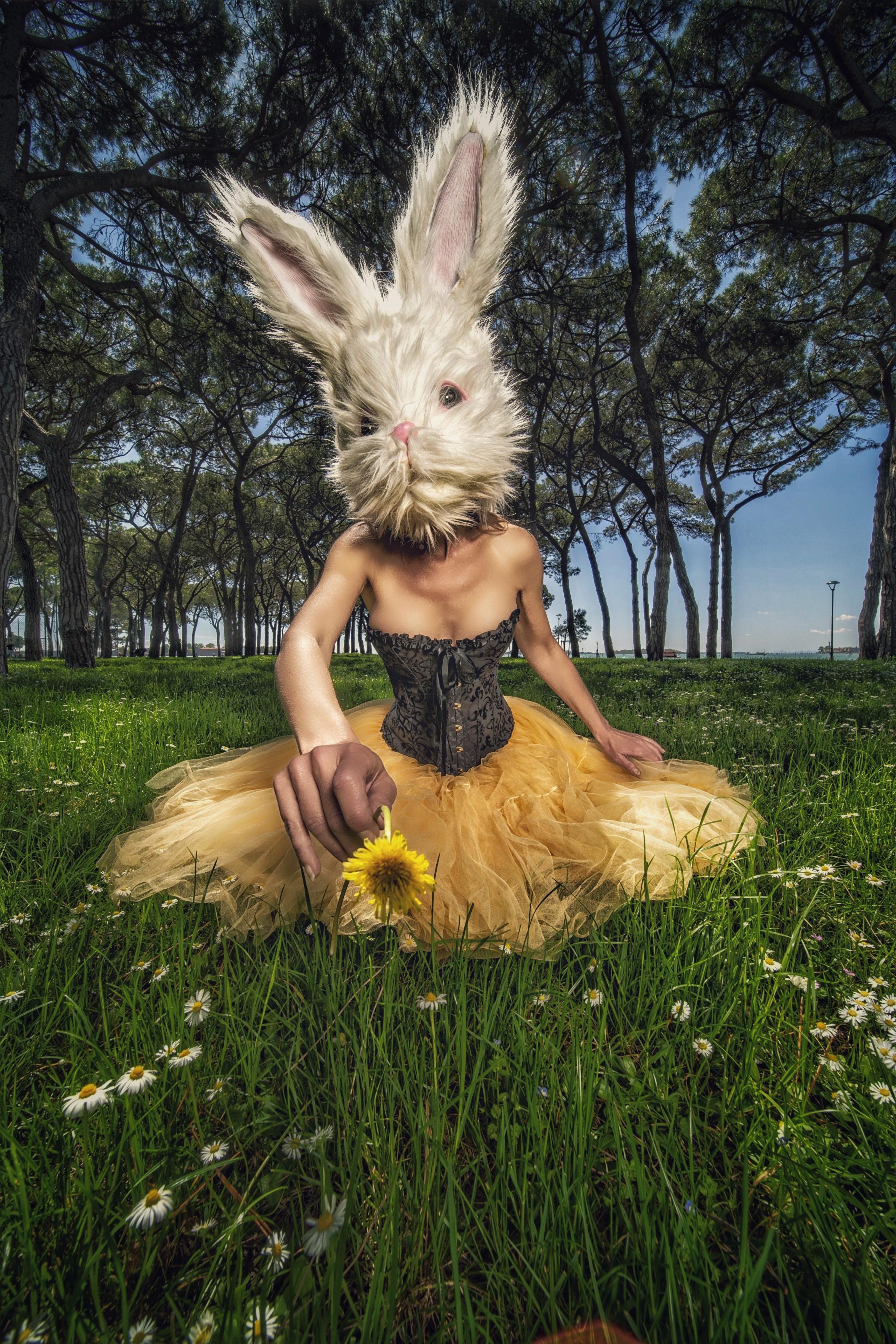 PetraH-Bunny-20