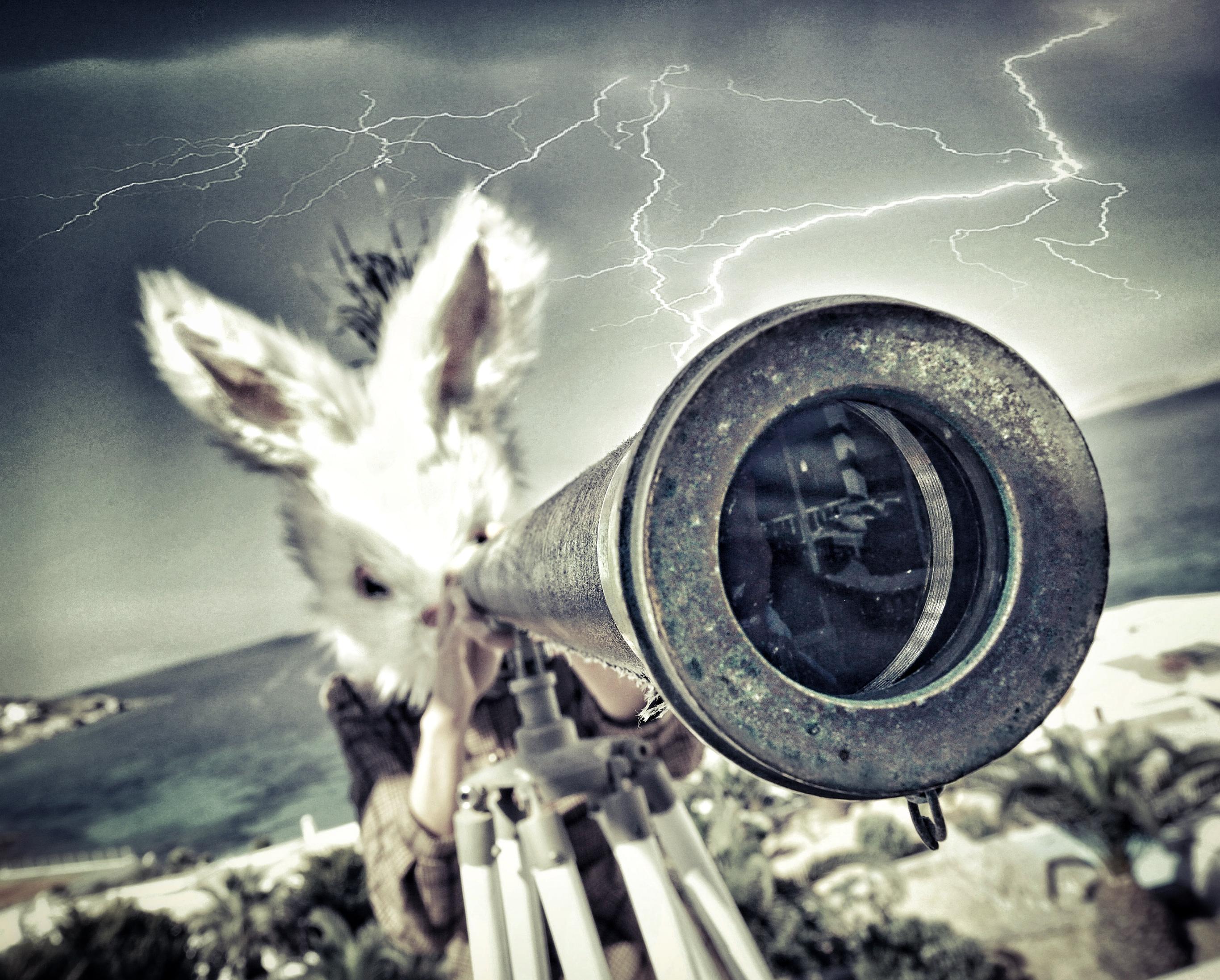 PetraH-Bunny-22